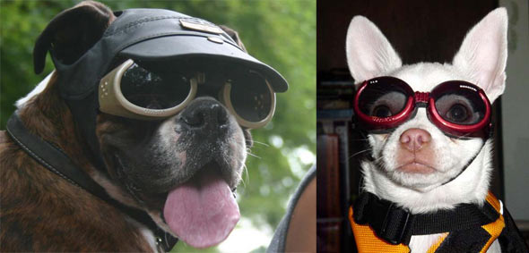 2. Doggles