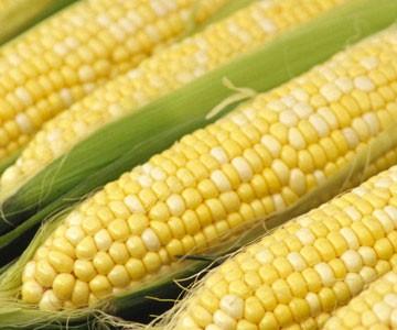 corn_ecotality_com.jpg