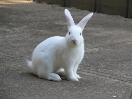 rabbits scamper at conshohocken home contoveros