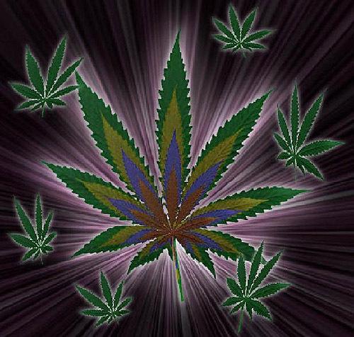 zcannabis