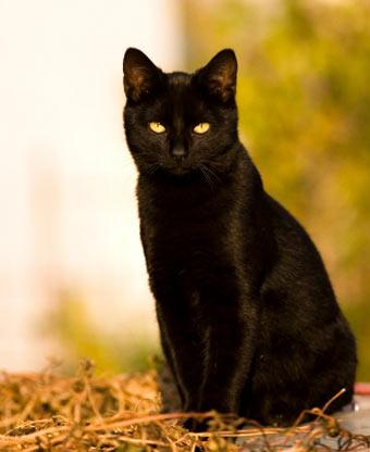 zzblackcat