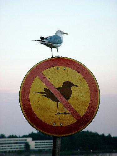 nobirdssignstart-here