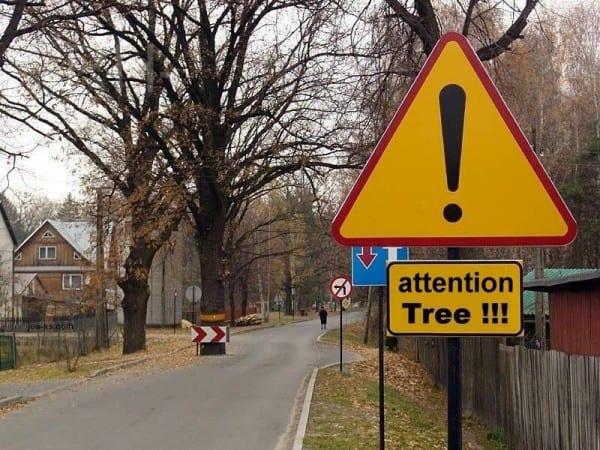 treeinroad