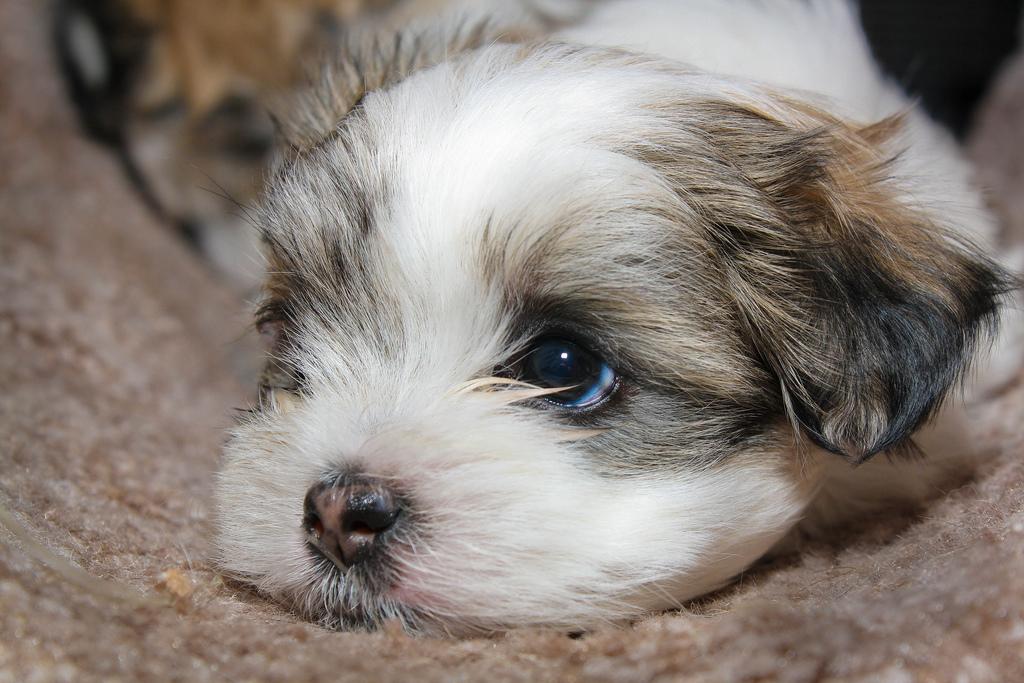 http://www.businesspundit.com/wp-content/uploads/2010/07/puppy.jpg