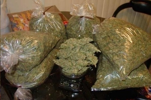 Image result for marijuana party