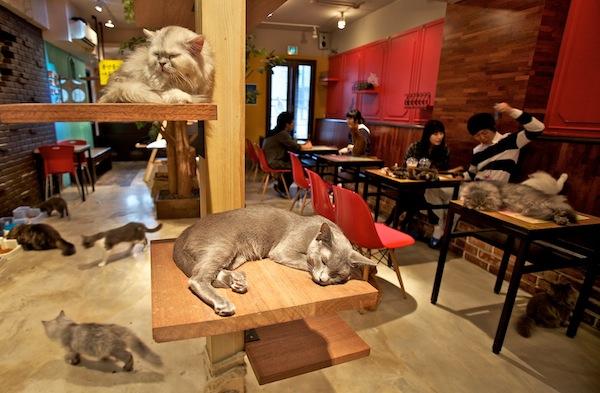 世界中から選りすぐった癒されすぎる15店の猫 ...: www.seojapan.com/blog/cat-cafe