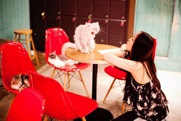 15 Coolest Cat Cafés