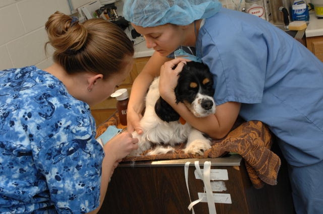 Jobs in Public Health Public Health Veterinarian