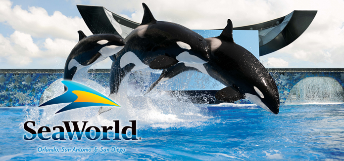SeaWorld and Killer Whales
