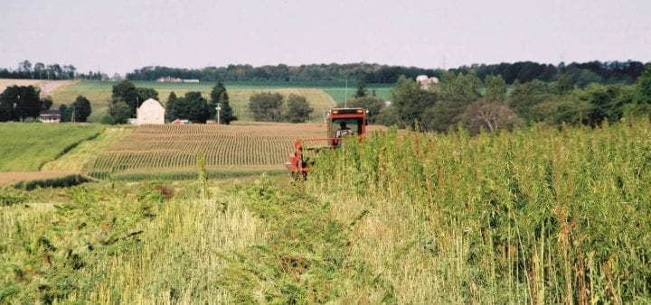 25 Facts About The Emerging Industrial Hemp Industry